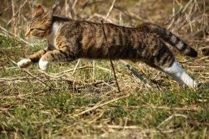 活発に運動する猫