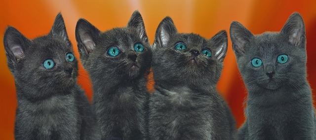 見上げる猫たち