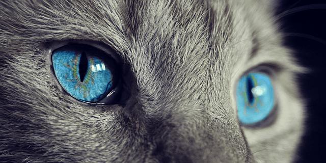猫の目は暗闇でも働く