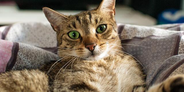 猫の好みを探る方法